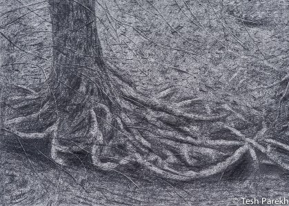 Roots. 10x14 Drawing. Graphite on paper.