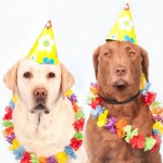 Cani-carnevale-copertina