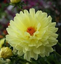 From Around My Garden