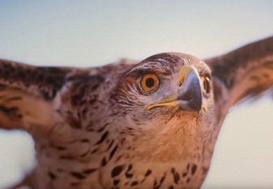 Jak zdobyć białą skórkę dla orła w Assassin's Creed: Origins?