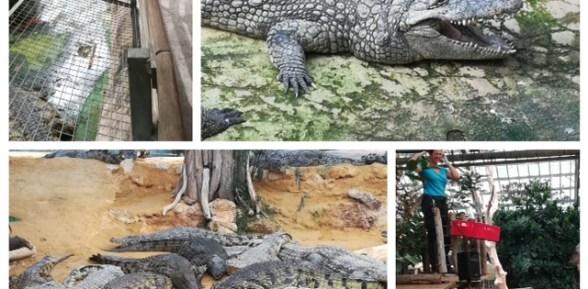 Halloween à la ferme aux crocodiles (code de réduction)