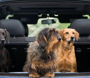 Dog Cars