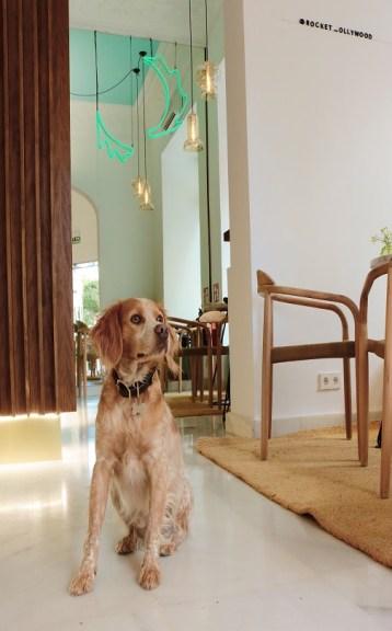 Rocket_Ollywood_dog-friendly-te-veo-en-madrid.jpg