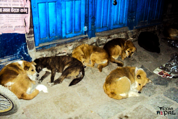 Every dog has its day; Furry buddies of the Freak Street sleeping away the 'bandh'