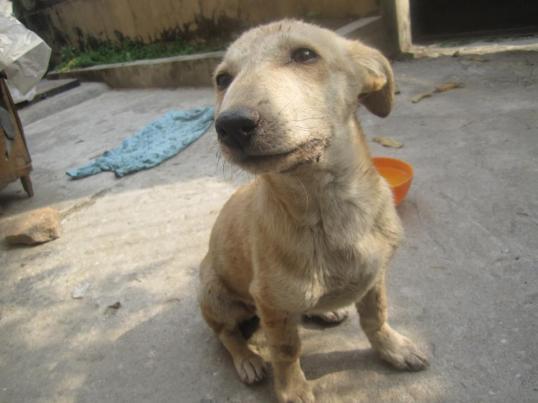 animal nepal