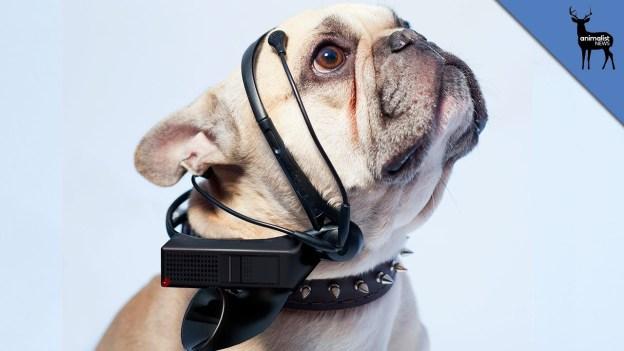 Dog Translator of The Future