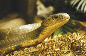 Increasing Snake Bite Cases in Kathmandu