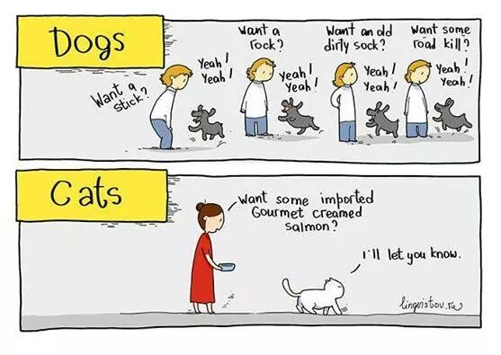 cats-dogs
