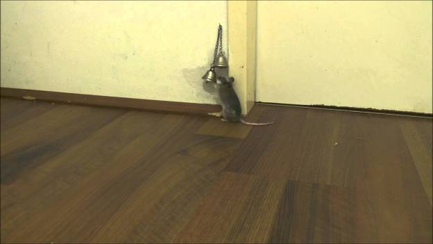 Smart mouse rings bell to have someone open the door!