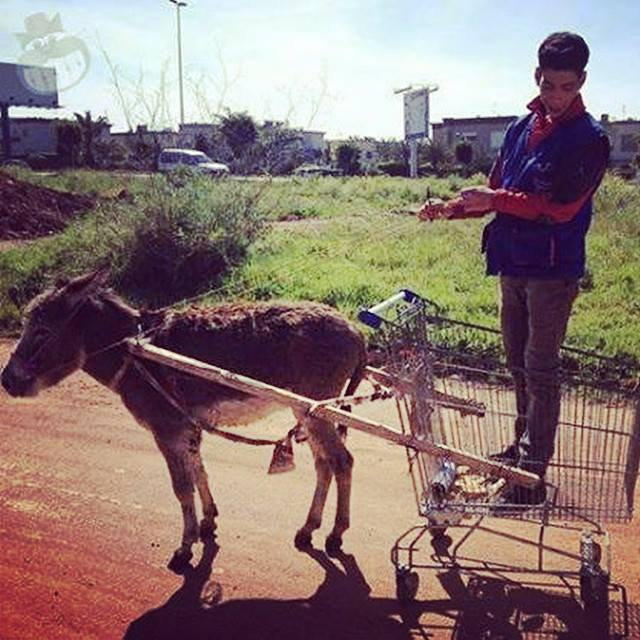 check-out-my-new-ride-cart-donkey-edition