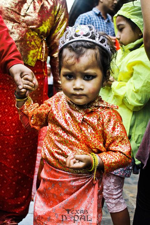 gai-jatra-festival-kathmandu-2069-4