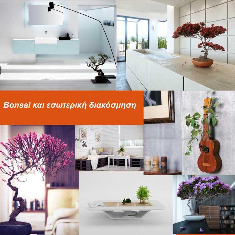 Bonsai και εσωτερική διακόσμηση
