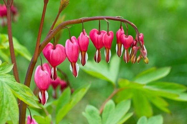 φυτά για πέργκολες16
