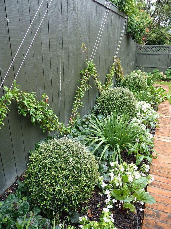 Αναρριχώμενα φυτά ιδέες (5)
