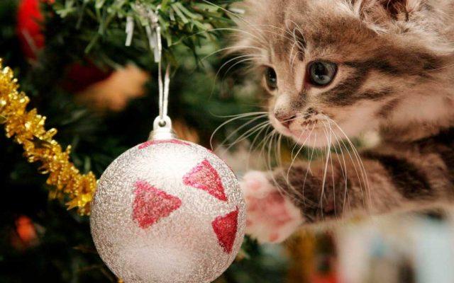 Χριστουγεννιάτικες εικόνες13