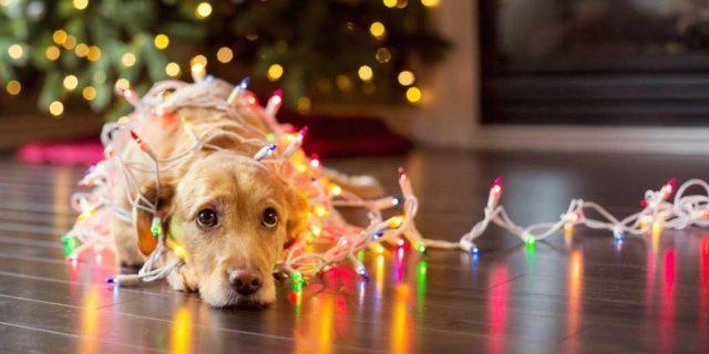 Χριστουγεννιάτικες εικόνες15