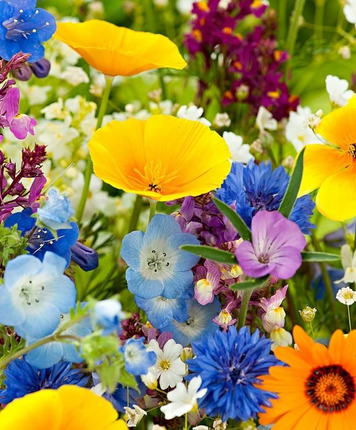 μπαλκόνι-φυτά-λουλούδια3