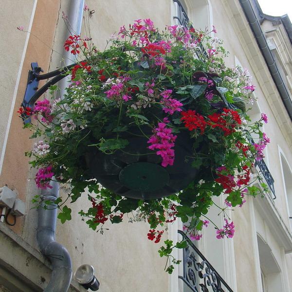 Λουλούδια στο μπαλκόνι27