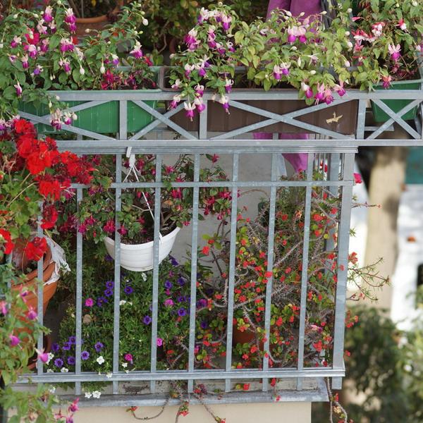 Λουλούδια στο μπαλκόνι48