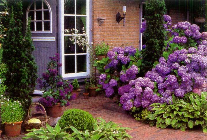 Λουλούδια μπροστά από το σπίτι23