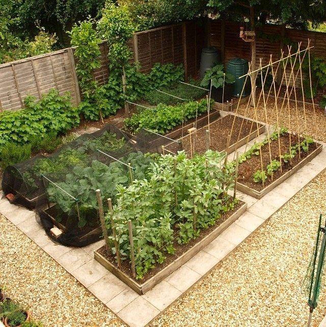 αστικός κήπος λαχανικών ιδέες15