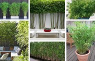 Μπαμπού: η νέα τάση για την γλάστρα και τον κήπο σας