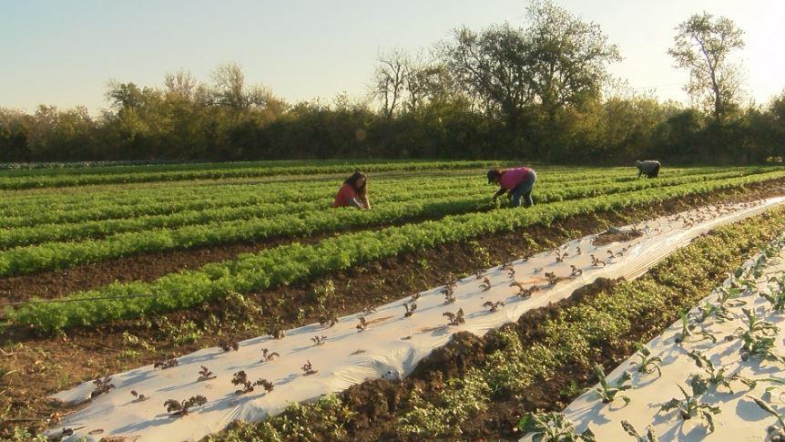 farming_1512002538118-54787063.JPG
