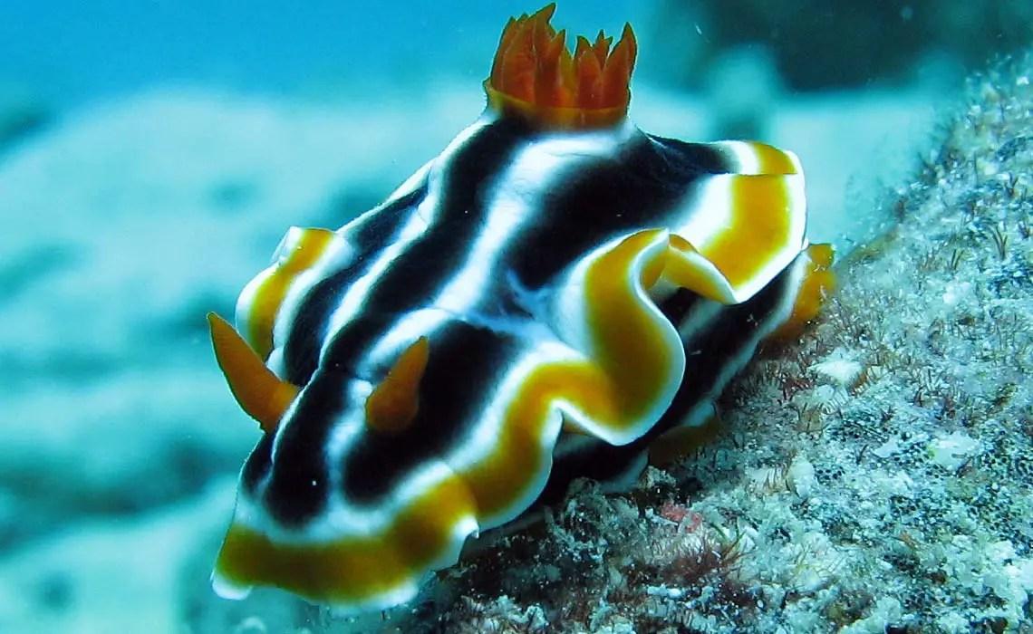 Scuba Barrier Diving Reef Great