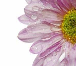 Beklagar sorgen – Hitta en fin text till ditt kondoleanskort