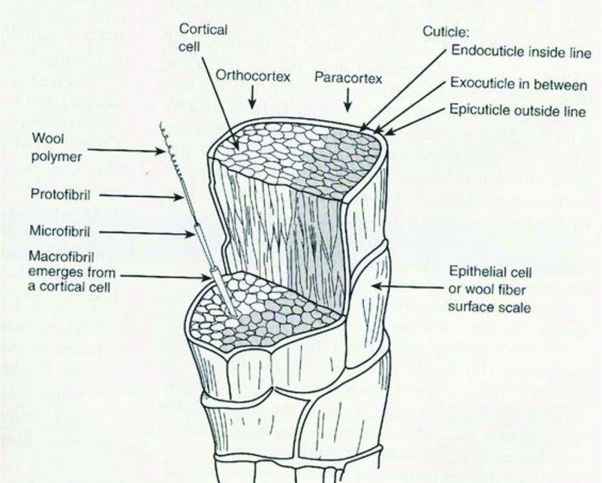Morphological Structure Of Wool Fibre 6