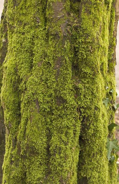 Moss0154 Free Background Texture Moss Mossy Tree Bark