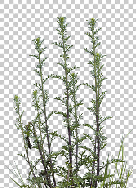 Tall Foliage Plants
