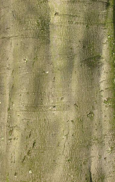 Small Bamboo Tree