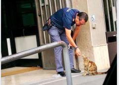 Un gatto, un poliziotto ed il post di Salvini