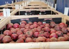 Sicurezza alimentare, stop a container con melograni tunisini