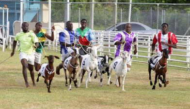 The field was tight during this race at the Buccoo Integrated Facility.