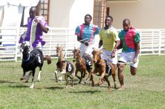 Jockeys race behind their goats during the Festival.