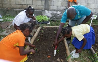Tobago Agricultural Society president Micheson Neptune, right background, shows young Mason Hall Y-Zone Police Youth club member Kylei Murray to plant seedlings, while TAS vice president Olive James, left background, guides Shameila Rogers following the launch of the initiative.