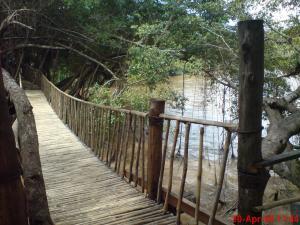 bamboo chain-bridge