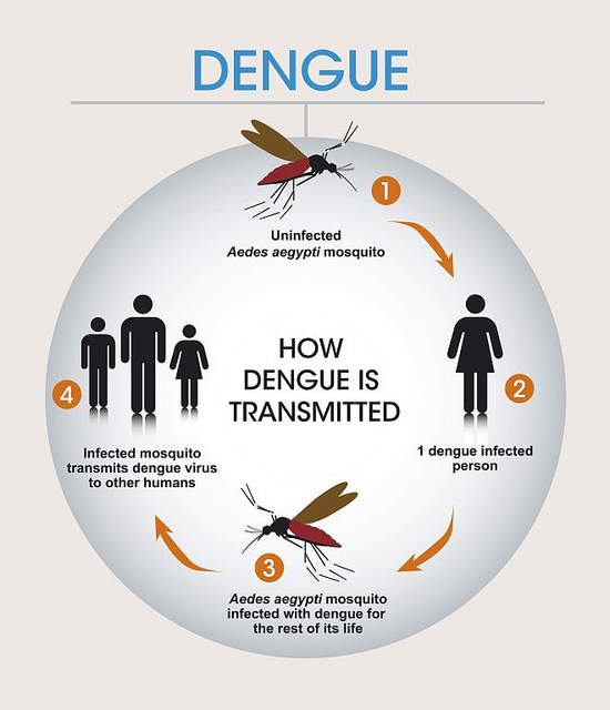 There is still no vaccine for dengue, a mosquito-borne disease.
