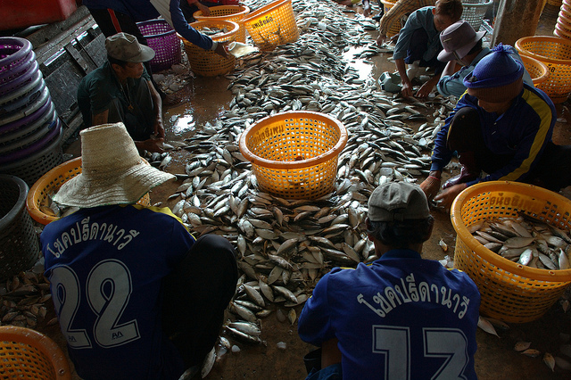 Sustainable fishing is key to addressing the overall IUU problem