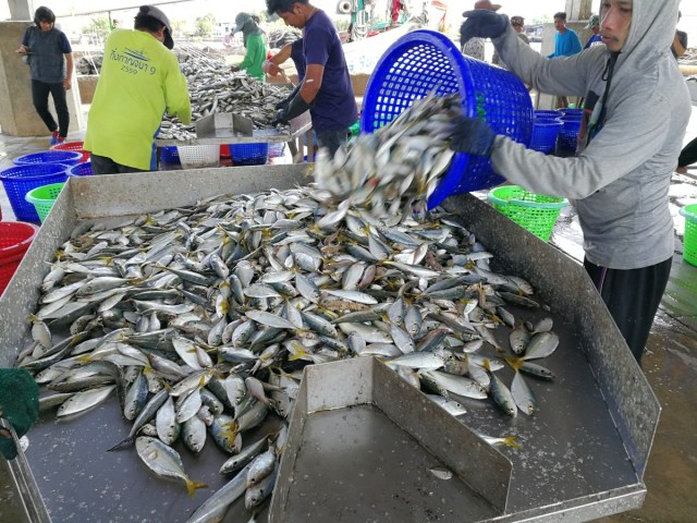 Migrant workers at the Samut Sakhon fish market
