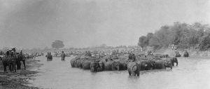 1900-Herding elephants Rangsit canal.
