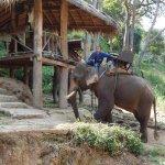 Maesa elephant camp Chiang Mai