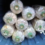 Mushroom farming in Thailand