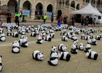 1,600 Pandas World Tour