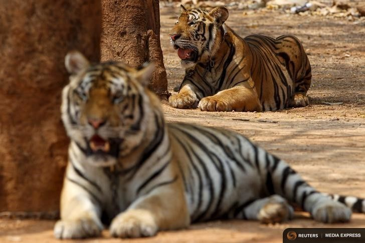 Tiger Temple gets the go ahead to build zoo