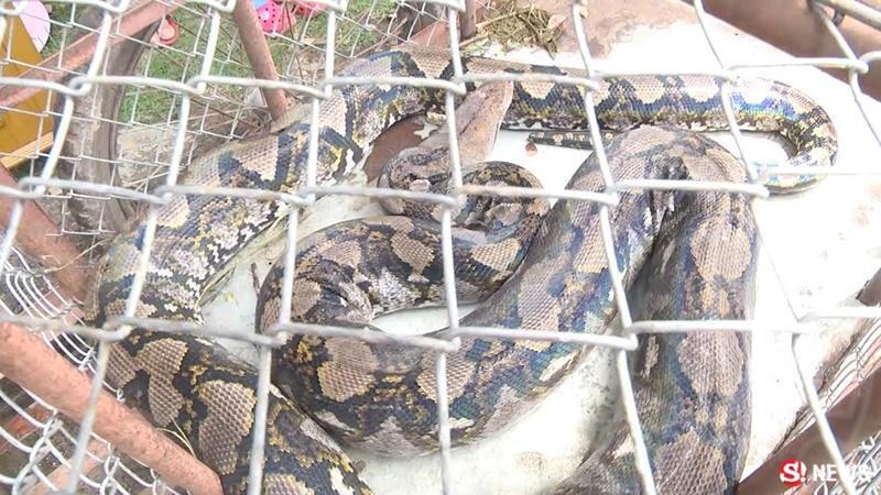 Thai Culture Snakes