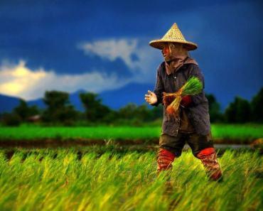 Thai Goddess of Rice