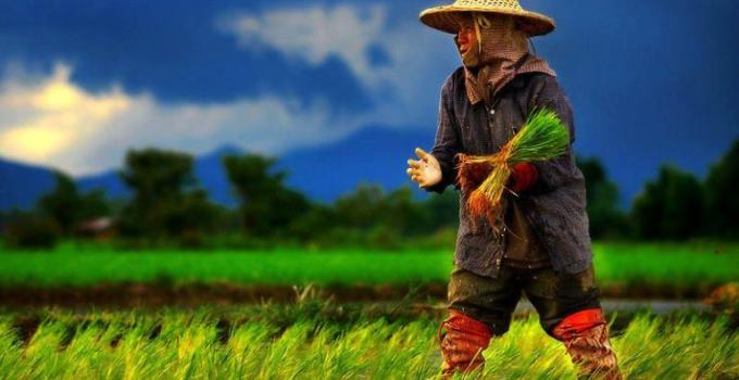 Thai Goddess of Rice Beautiful But Fragile A Staple Diet of The Thais